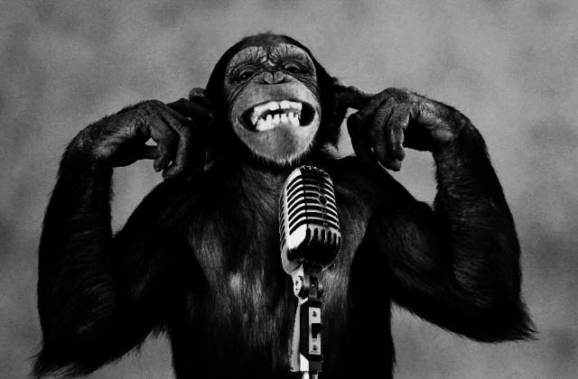 لماذا لا تتحدث القردة؟