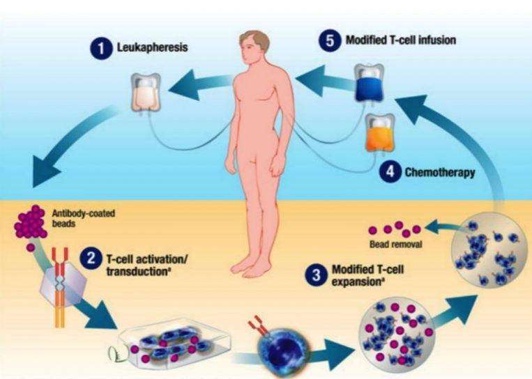 Immunotherapy_partII_inset-768x600.jpg