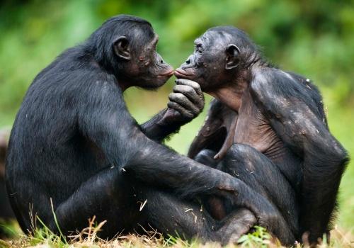 هل يوجد مثلية جنسية في المملكة الحيوانية ؟ – تقرير بالعربي
