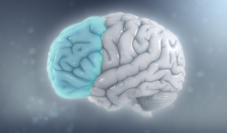 دراسة جديدة على المخ البشري توضح لماذا يوجد أشخاص أكثر إبداعا عن غيرهم